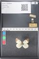 http://mczbase.mcz.harvard.edu/specimen_images/ent-lepidoptera/images/2011_03_21/IMG_077744.JPG