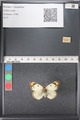 http://mczbase.mcz.harvard.edu/specimen_images/ent-lepidoptera/images/2011_03_21/IMG_077745.JPG