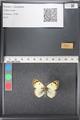 http://mczbase.mcz.harvard.edu/specimen_images/ent-lepidoptera/images/2011_03_21/IMG_077746.JPG