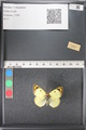 http://mczbase.mcz.harvard.edu/specimen_images/ent-lepidoptera/images/2011_03_21/IMG_077747.JPG