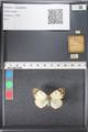 http://mczbase.mcz.harvard.edu/specimen_images/ent-lepidoptera/images/2011_03_21/IMG_077748.JPG