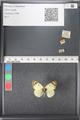 http://mczbase.mcz.harvard.edu/specimen_images/ent-lepidoptera/images/2011_03_21/IMG_077749.JPG