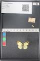 http://mczbase.mcz.harvard.edu/specimen_images/ent-lepidoptera/images/2011_03_21/IMG_077751.JPG