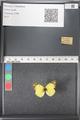 http://mczbase.mcz.harvard.edu/specimen_images/ent-lepidoptera/images/2011_03_21/IMG_077752.JPG