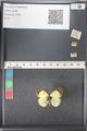http://mczbase.mcz.harvard.edu/specimen_images/ent-lepidoptera/images/2011_03_21/IMG_077755.JPG