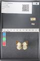 http://mczbase.mcz.harvard.edu/specimen_images/ent-lepidoptera/images/2011_03_21/IMG_077759.JPG