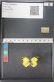 http://mczbase.mcz.harvard.edu/specimen_images/ent-lepidoptera/images/2011_03_21/IMG_077760.JPG