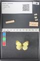http://mczbase.mcz.harvard.edu/specimen_images/ent-lepidoptera/images/2011_03_21/IMG_077764.JPG