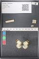 http://mczbase.mcz.harvard.edu/specimen_images/ent-lepidoptera/images/2011_03_21/IMG_077766.JPG