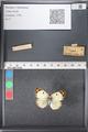 http://mczbase.mcz.harvard.edu/specimen_images/ent-lepidoptera/images/2011_03_21/IMG_077767.JPG