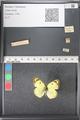 http://mczbase.mcz.harvard.edu/specimen_images/ent-lepidoptera/images/2011_03_21/IMG_077768.JPG