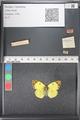 http://mczbase.mcz.harvard.edu/specimen_images/ent-lepidoptera/images/2011_03_21/IMG_077769.JPG