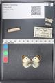 http://mczbase.mcz.harvard.edu/specimen_images/ent-lepidoptera/images/2011_03_21/IMG_077771.JPG