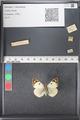 http://mczbase.mcz.harvard.edu/specimen_images/ent-lepidoptera/images/2011_03_21/IMG_077772.JPG