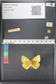 http://mczbase.mcz.harvard.edu/specimen_images/ent-lepidoptera/images/2011_03_21/IMG_077773.JPG