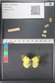 http://mczbase.mcz.harvard.edu/specimen_images/ent-lepidoptera/images/2011_03_21/IMG_077775.JPG
