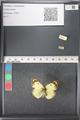http://mczbase.mcz.harvard.edu/specimen_images/ent-lepidoptera/images/2011_03_21/IMG_077776.JPG
