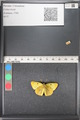http://mczbase.mcz.harvard.edu/specimen_images/ent-lepidoptera/images/2011_03_21/IMG_077778.JPG