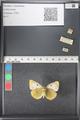 http://mczbase.mcz.harvard.edu/specimen_images/ent-lepidoptera/images/2011_03_21/IMG_077780.JPG