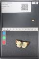 http://mczbase.mcz.harvard.edu/specimen_images/ent-lepidoptera/images/2011_03_21/IMG_077783.JPG