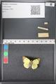 http://mczbase.mcz.harvard.edu/specimen_images/ent-lepidoptera/images/2011_03_21/IMG_077784.JPG