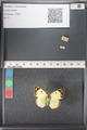 http://mczbase.mcz.harvard.edu/specimen_images/ent-lepidoptera/images/2011_03_21/IMG_077785.JPG