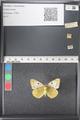 http://mczbase.mcz.harvard.edu/specimen_images/ent-lepidoptera/images/2011_03_21/IMG_077786.JPG