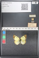 http://mczbase.mcz.harvard.edu/specimen_images/ent-lepidoptera/images/2011_03_21/IMG_077787.JPG