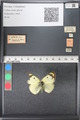 http://mczbase.mcz.harvard.edu/specimen_images/ent-lepidoptera/images/2011_03_21/IMG_077788.JPG