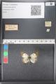 http://mczbase.mcz.harvard.edu/specimen_images/ent-lepidoptera/images/2011_03_21/IMG_077790.JPG