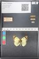 http://mczbase.mcz.harvard.edu/specimen_images/ent-lepidoptera/images/2011_03_21/IMG_077796.JPG