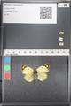 http://mczbase.mcz.harvard.edu/specimen_images/ent-lepidoptera/images/2011_03_21/IMG_077800.JPG