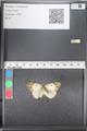 http://mczbase.mcz.harvard.edu/specimen_images/ent-lepidoptera/images/2011_03_21/IMG_077802.JPG