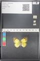 http://mczbase.mcz.harvard.edu/specimen_images/ent-lepidoptera/images/2011_03_21/IMG_077803.JPG