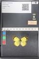 http://mczbase.mcz.harvard.edu/specimen_images/ent-lepidoptera/images/2011_03_21/IMG_077805.JPG