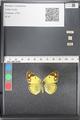 http://mczbase.mcz.harvard.edu/specimen_images/ent-lepidoptera/images/2011_03_21/IMG_077806.JPG