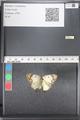 http://mczbase.mcz.harvard.edu/specimen_images/ent-lepidoptera/images/2011_03_21/IMG_077808.JPG
