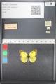 http://mczbase.mcz.harvard.edu/specimen_images/ent-lepidoptera/images/2011_03_21/IMG_077815.JPG