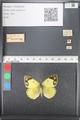 http://mczbase.mcz.harvard.edu/specimen_images/ent-lepidoptera/images/2011_03_21/IMG_077818.JPG