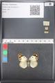 http://mczbase.mcz.harvard.edu/specimen_images/ent-lepidoptera/images/2011_03_21/IMG_077819.JPG