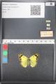 http://mczbase.mcz.harvard.edu/specimen_images/ent-lepidoptera/images/2011_03_21/IMG_077820.JPG
