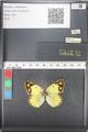http://mczbase.mcz.harvard.edu/specimen_images/ent-lepidoptera/images/2011_03_21/IMG_077821.JPG