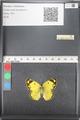 http://mczbase.mcz.harvard.edu/specimen_images/ent-lepidoptera/images/2011_03_21/IMG_077823.JPG
