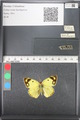 http://mczbase.mcz.harvard.edu/specimen_images/ent-lepidoptera/images/2011_03_21/IMG_077825.JPG