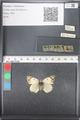 http://mczbase.mcz.harvard.edu/specimen_images/ent-lepidoptera/images/2011_03_21/IMG_077826.JPG
