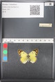 http://mczbase.mcz.harvard.edu/specimen_images/ent-lepidoptera/images/2011_03_21/IMG_077827.JPG