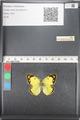 http://mczbase.mcz.harvard.edu/specimen_images/ent-lepidoptera/images/2011_03_21/IMG_077828.JPG
