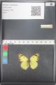 http://mczbase.mcz.harvard.edu/specimen_images/ent-lepidoptera/images/2011_03_21/IMG_077829.JPG