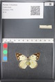 http://mczbase.mcz.harvard.edu/specimen_images/ent-lepidoptera/images/2011_03_21/IMG_077830.JPG