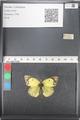 http://mczbase.mcz.harvard.edu/specimen_images/ent-lepidoptera/images/2011_03_21/IMG_077831.JPG